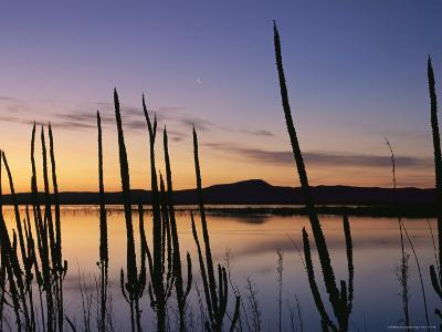 A New Moon and Silhouetted Weeds Along the Water at Twilight-Joel Sartore-Photographic Print