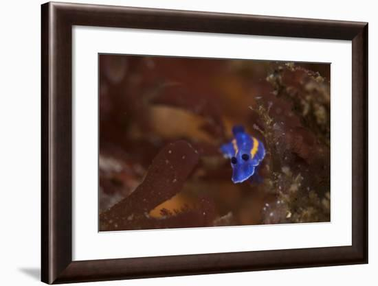 A Nudibranch-Cesare Naldi-Framed Photographic Print