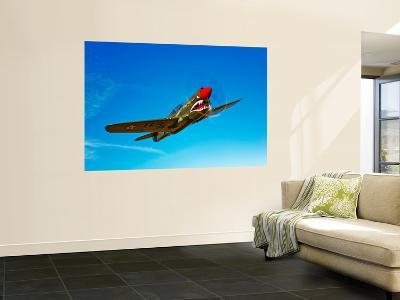 A P-40E Warhawk in Flight-Stocktrek Images-Wall Mural
