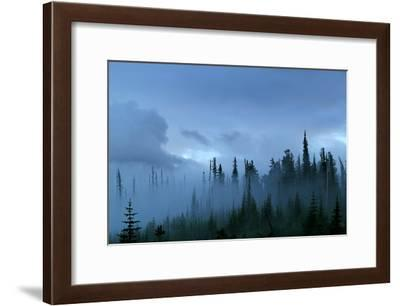 A Pacific Northwest Forest Just After A Storm In Fog-Hannah Dewey-Framed Photographic Print