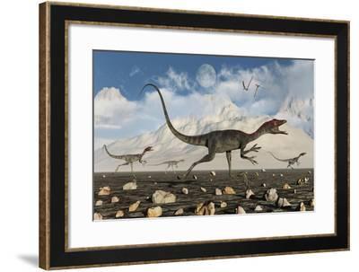 A Pack of Carnivorous Compsognathus Dinosaurs During Earth's Jurassic Period-Stocktrek Images-Framed Art Print