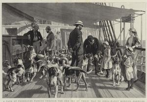 A Pack of Foxhounds Passing Through the Red Sea on their Way to India, Early Morning Exercise