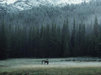 A Packhorse Is Turned Loose to Graze a Meadow-James L^ Amos-Photographic Print