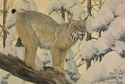 A Painting of a Canada Lynx Standing on Fallen Tree Trunk-Louis Agassi Fuertes-Giclee Print