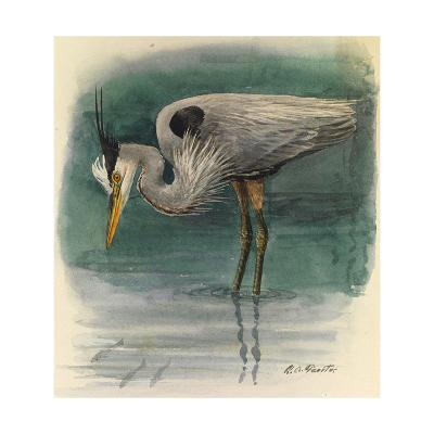 A Painting of a Great Glue Heron Hunting for Fish in Shallow Water-Louis Agassi Fuertes-Giclee Print