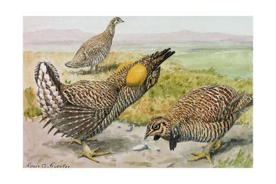 A Painting of a Male and Female Prairie Chicken with a Heath Hen-Louis Agassi Fuertes-Giclee Print