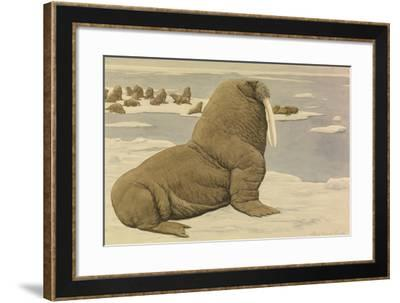 A Painting of a Pacific Walrus Sitting on Ice in Front of the Herd-Louis Agassi Fuertes-Framed Giclee Print