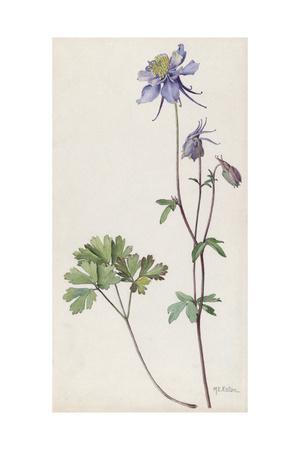 https://imgc.artprintimages.com/img/print/a-painting-of-a-sprig-of-colorado-blue-columbine_u-l-pojmtx0.jpg?p=0