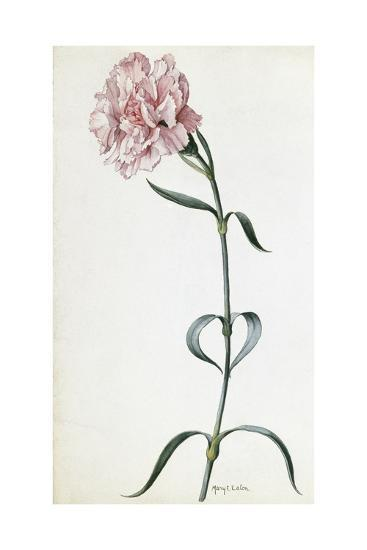 A Painting of a Sprig of Pink Carnation-Mary E. Eaton-Giclee Print