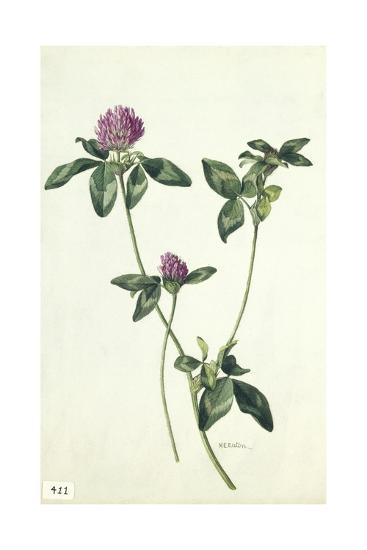 A Painting of a Sprig of Red Clover-Mary E. Eaton-Giclee Print