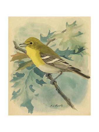 https://imgc.artprintimages.com/img/print/a-painting-of-a-yellow-throated-vireo_u-l-pojs5d0.jpg?p=0