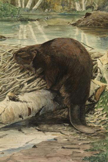 A Painting of an American Beaver Sitting on a Freshly Gnawed Log-Louis Agassi Fuertes-Giclee Print