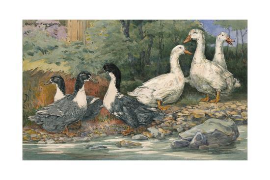 A Painting of Blue Swedish Ducks and Aylesbury Ducks-Hashime Murayama-Giclee Print