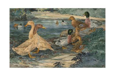 A Painting of Buff Ducks and Gray Call Ducks-Hashime Murayama-Giclee Print