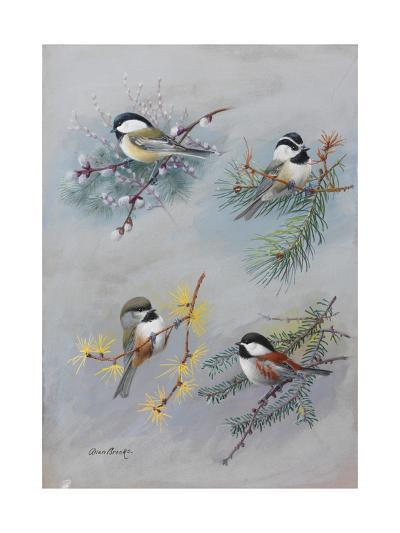 A Painting of Several Species of Chickadee-Allan Brooks-Giclee Print