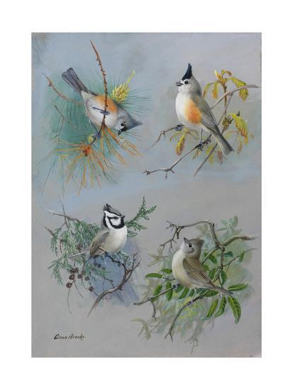 A Painting of Several Species of Titmouse-Allan Brooks-Giclee Print