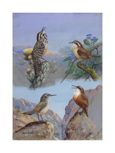 A Painting of Several Wren Species-Allan Brooks-Giclee Print