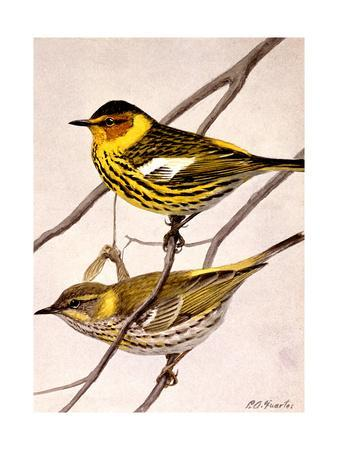 https://imgc.artprintimages.com/img/print/a-painting-of-the-male-and-female-cape-may-warbler_u-l-q1bj3ro0.jpg?p=0