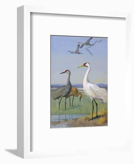A Painting of Three Species of Cranes-Allan Brooks-Framed Giclee Print
