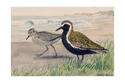 A Painting of Two Golden Plovers in Winter and Summer Plumage-Louis Agassi Fuertes-Giclee Print