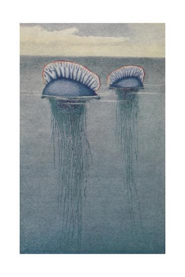 A Painting of Two Jellyfish known as the Portuguese Man-Of-War-Hashime Murayama-Giclee Print