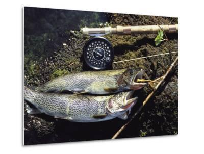 A Pair of Cutthroat Trout, Salmo Clarki, and a Reel Lie on a Bank-Bill Curtsinger-Metal Print