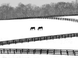 A Pair of Horses Graze Through a Pasture Near Midway, Ky.