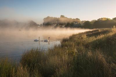 A Pair of Mute Swans, Cygnus Olor, Swim over a Misty Pen Pond at Sunrise in Richmond Park-Alex Saberi-Photographic Print