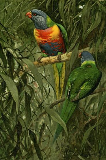 A Pair of Rainbow Lorikeets, 1890-Alfred Brehm-Giclee Print