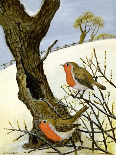 A Pair of Robins-Margaret Loxton-Giclee Print