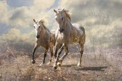 A Pair of White Horses-SashaS-Photographic Print