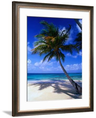 A Palm Tree Bends to the Caribbean Sea on a Key in the San Blas Islands, San Blas, Panama-Alfredo Maiquez-Framed Photographic Print