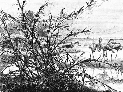 A Parliament of Birds on the Lake Menaleh, 1880-Wilhelm Gentz-Giclee Print