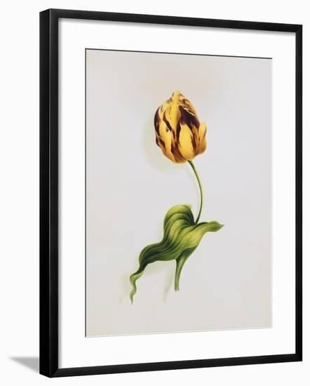 A Parrot Tulip-James Holland-Framed Giclee Print