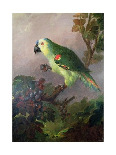 A Parrot-Jakob Bogdani Or Bogdany-Giclee Print