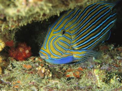 https://imgc.artprintimages.com/img/print/a-parrotfish-sleeps-in-a-crevice-in-a-reef_u-l-p3qo8c0.jpg?p=0
