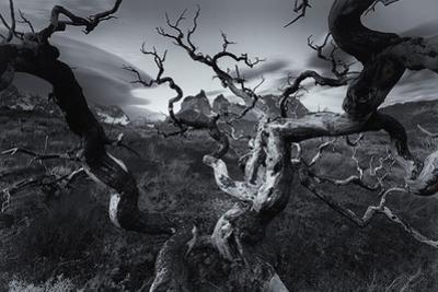 A Patagonia Scenic of the Andes Mountains, Weathered Dead Tree Branches, and Dramatic Clouds