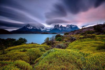 A Patagonia Scenic with the Andes Mountains, a Lake, Green Growth, Wildflowers, and Clouds--Photographic Print