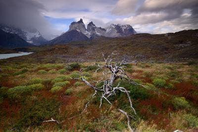 A Patagonia Scenic with the Andes Mountains, Scrub Vegetation, a Dead Tree, and Dramatic Clouds--Photographic Print