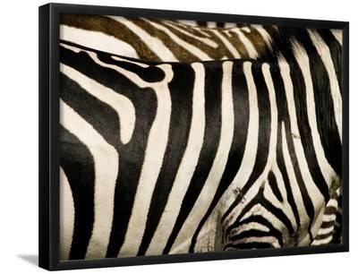 A Pattern of Stripes on a Burchell's Zebra.  Kenya.-Karine Aigner-Framed Photographic Print