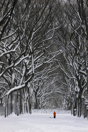 A Person under a Canopy of Snow Laden Trees in Central Park-Kike Calvo-Premium Photographic Print