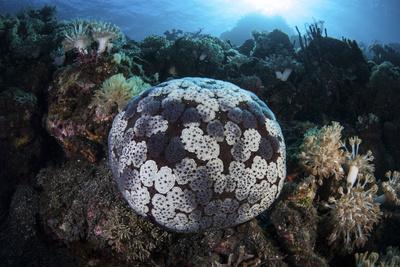 https://imgc.artprintimages.com/img/print/a-pin-cushion-starfish-clings-to-a-coral-reef_u-l-q12so1t0.jpg?p=0