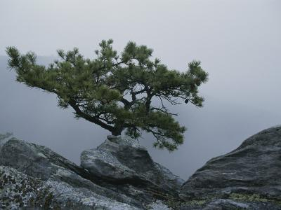 A Pine Tree Clings to a Rocky Ridge Overlooking the Shenandoah Valley-George F^ Mobley-Photographic Print