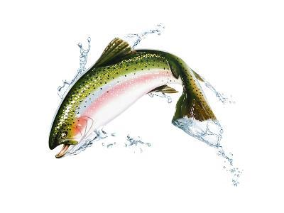 A Pink Salmon Jumping Out of the Water--Art Print