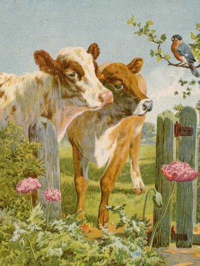 A Piping Bullfinch-English School-Giclee Print