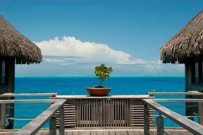 A Plant in a Walkway Between Cottages on Bora Bora-Karen Kasmauski-Photographic Print