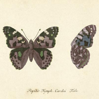 Papilio Nymph Cardui Fabr