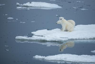 A Polar Bear and Cub on Pack Ice-Michael Melford-Photographic Print