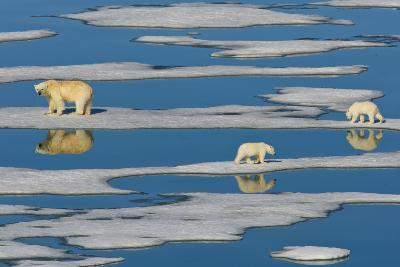 A Polar Bear and Her Cubs Walk Along Sparse Pack Ice-Ralph Lee Hopkins-Photographic Print