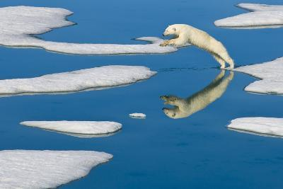 A Polar Bear Jumps from One Piece of Pack Ice to the Next-Ralph Lee Hopkins-Photographic Print